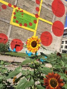 Urban Flower Field Blooming in August 2014