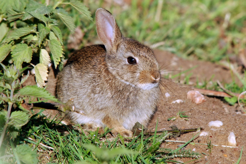 Rabbits: The New Plague – The UST Stewardship Science Program